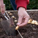 Μάρτιος-Απρίλιος Εργασίες στον Κήπο