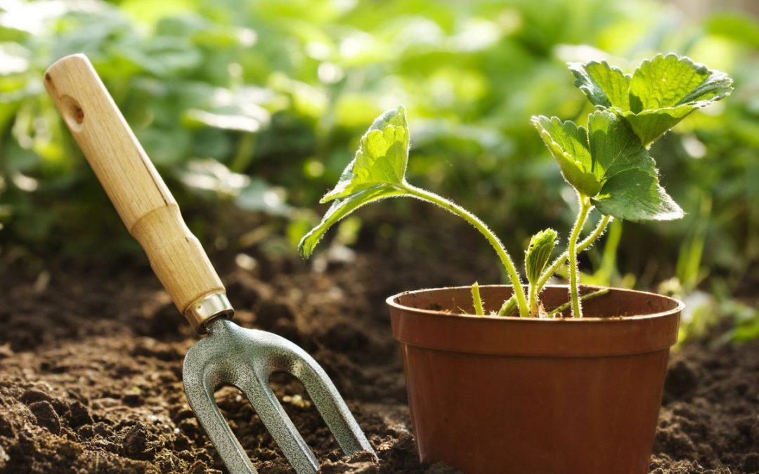 Μάιος-Ιούνιος Εργασίες στον Κήπο