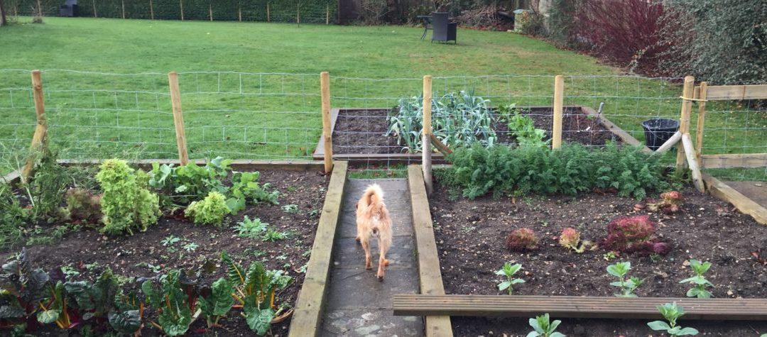 Νοέμβριος-Δεκέμβριος Εργασίες στον Κήπο