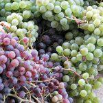 Φτιάχνω Πρώτη Φορά Σπιτικό Κρασί - Η Εμπειρία Μου και Λάθη