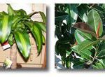 Αυτά τα Φυτά Εσωτερικού Χώρου Καθαρίζουν τον Αέρα Σύμφωνα με τη NASA