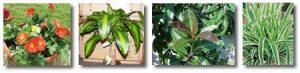 Φυτά Εσωτερικού Χώρου Καθαρίζουν τον Αέρα
