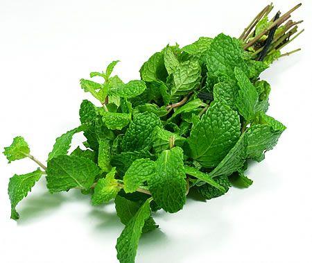 ΔΥΟΣΜΟΣ-MINT-SPEARMINT-PEPPERMINT Αρωματικά Φυτά σε Γλάστρες
