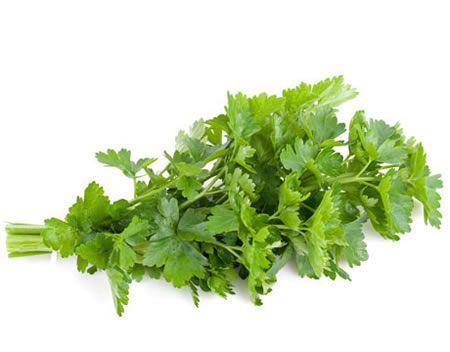 ΜΑΙΝΤΑΝΤΟΣ-PARSLEY Αρωματικά Φυτά σε Γλάστρες