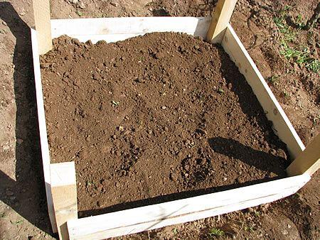 Άπλωσα με τη βοήθεια μίας τσουγκράνας, το καλά σκαμμένο και αφράτο χώμα ώστε να απλώσει σε όλο το πλαίσιο