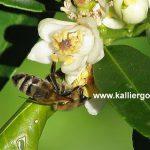 Σώστε τις Μέλισσες - Γιατί Πρέπει να τις Προσέχουμε και να τις Σεβόμαστε