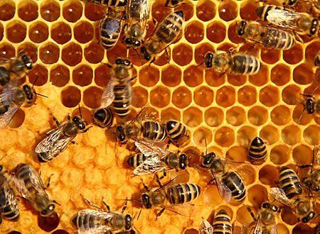 Κυψέλη, κελιά με μέλι