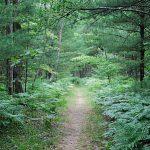 Ψυχολογία και Κήπος - Η Μάνα Γη