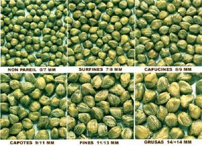 Κατηγορίες μεγεθών κάπαρης (καπαρόκουμπα)