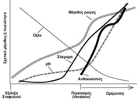 Εξέλιξη του σταφυλιού σε σχέση με τα ποιοτικά χαρακτηριστικά του μούστου - Διάγραμμα από Watson, 2003
