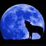Καλλιέργεια και Σπορά με Ημερολόγιο τη Σελήνη