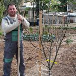 Πως να Φυτέψετε Δέντρα - Οδηγίες