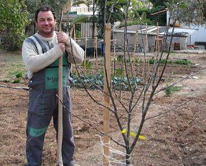 Πως να Φυτέψετε Δέντρα
