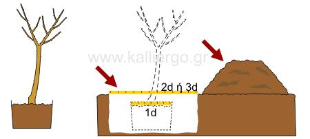 οδηγίες φύτεψης δένδρων 1