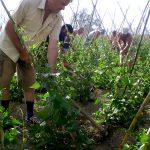 Πως Καλλιεργώ Φασόλια Φασολάκια - Οδηγίες καλλιέργειας - Ποικιλίες