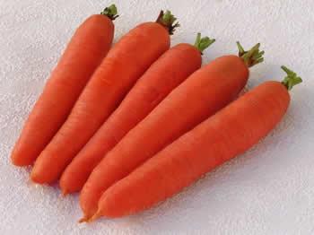 Καρότα ποικιλίας Amsterdam