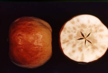 Τροφοπενία βορίου στο εσωτερικό του μήλου