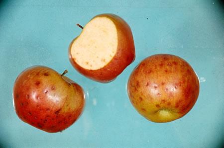 Τροφοπενία μαγγανίου σε καρπούς μήλου
