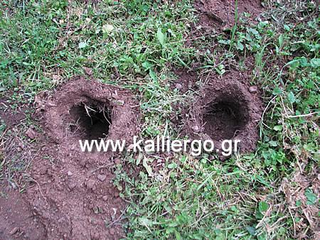 δύο τρύπες στο χώμα