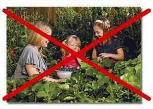 Ευρωπαϊκός Νόμος για τους Σπόρους