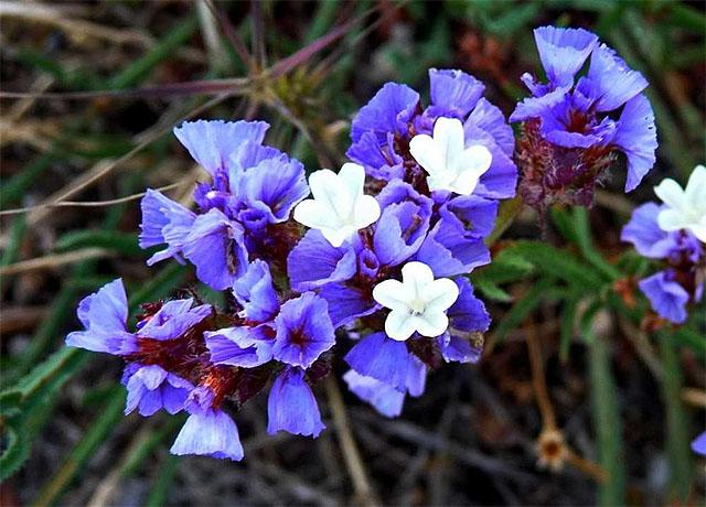 Στατική με μπλε άνθη