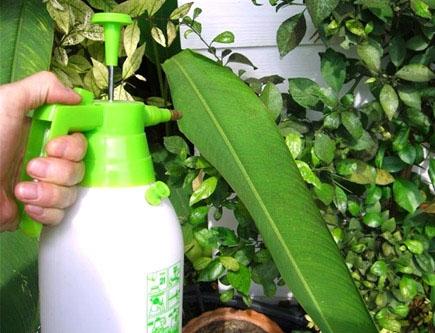 Φτιάχνουμε 7 Οικολογικά Εντομοκτόνα με Απλά Υλικά που Έχουμε στο Σπίτι