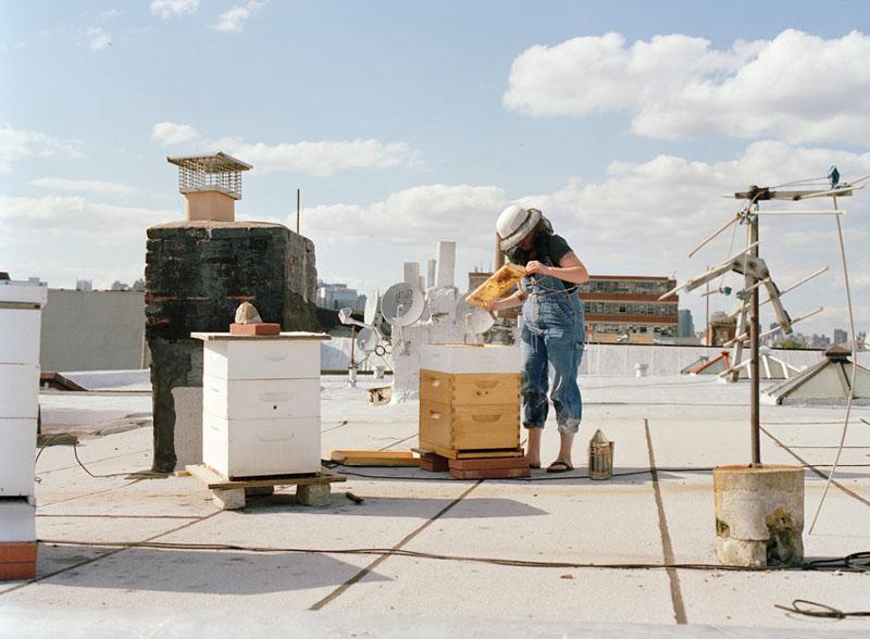 Μελισσοκομία στη ταράτσα