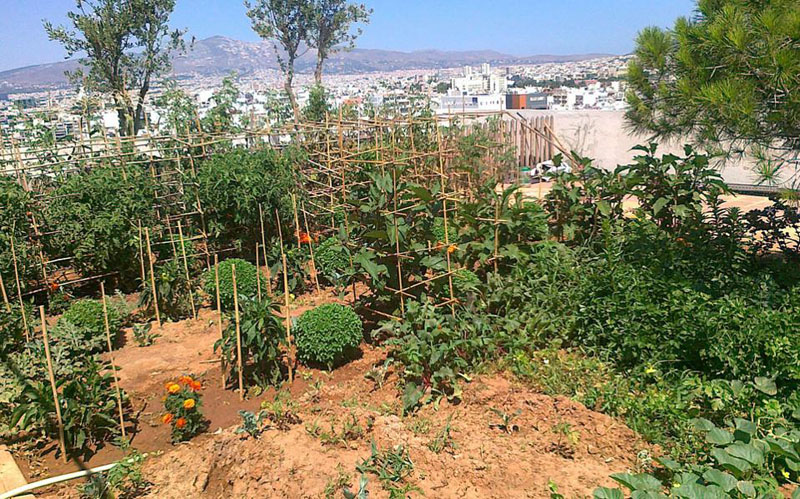 Λαχανόκηπος σε δώμα στους Αμπελοκήπους