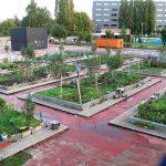 Αστική Καλλιέργεια σε Μπαλκόνια, Ταράτσες και Ελεύθερους Χώρους στην Πόλη