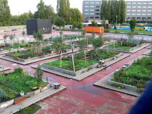 Αστική Καλλιέργεια σε Μπαλκόνια