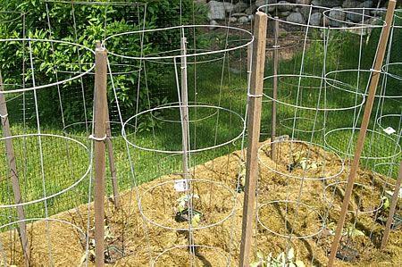 Στήριξη ντομάτας - Συρμάτινο κλουβί (Ι)