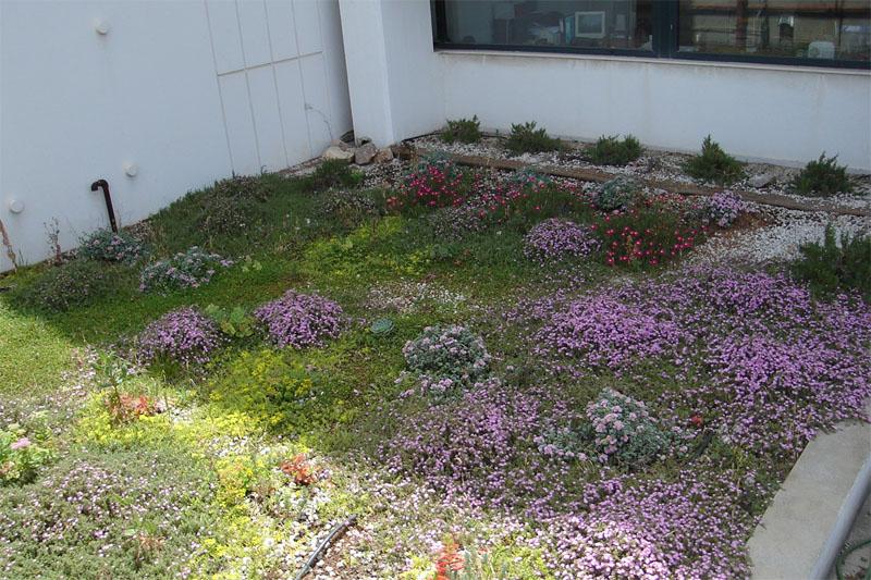 πράσινη στέγη άνοιξη ανεπτυγμένα φυτά