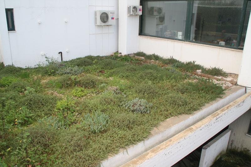 πράσινη στέγη χειμώνας ανεπτυγμένα φυτά