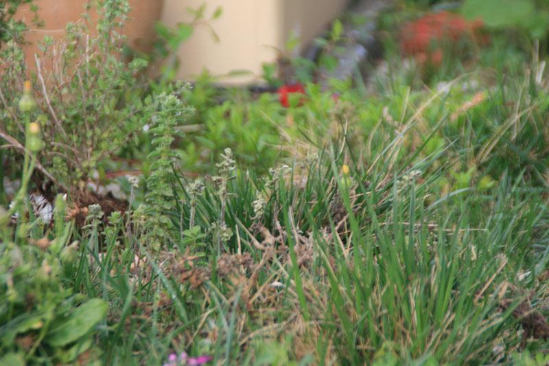 φυτά σε πράσινη ταράτσα