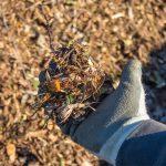 Χρήση Wood Chips στον Κήπο (θρυμματισμένου ξύλου) για την Βελτίωση του Χώματος (Εδάφους). Οφέλη, Τεχνικές, Εμπειρίες