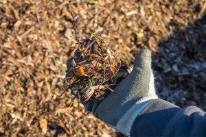 Χρήση Wood Chips στον Κήπο (θρυμματισμένου ξύλου) για την Βελτίωση του Χώματος