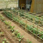 Κατασκευή - Στήριξη ντομάτας με κλουβί από καλάμια