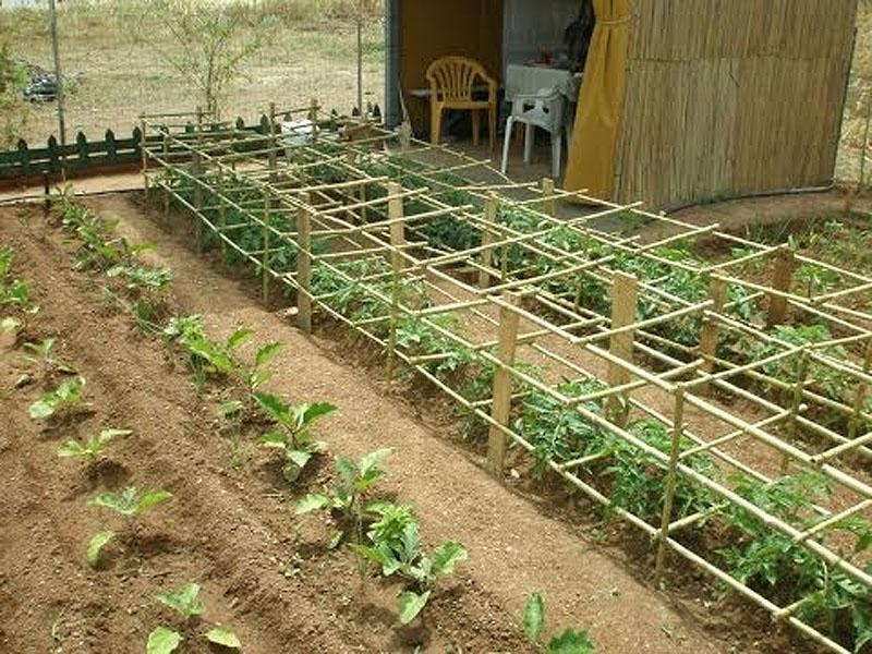 Κατασκευή – Στήριξη ντομάτας με κλουβί από καλάμια