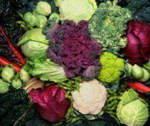 Λαχανικά που Φυτεύουμε Φθινόπωρο και Χειμώνα