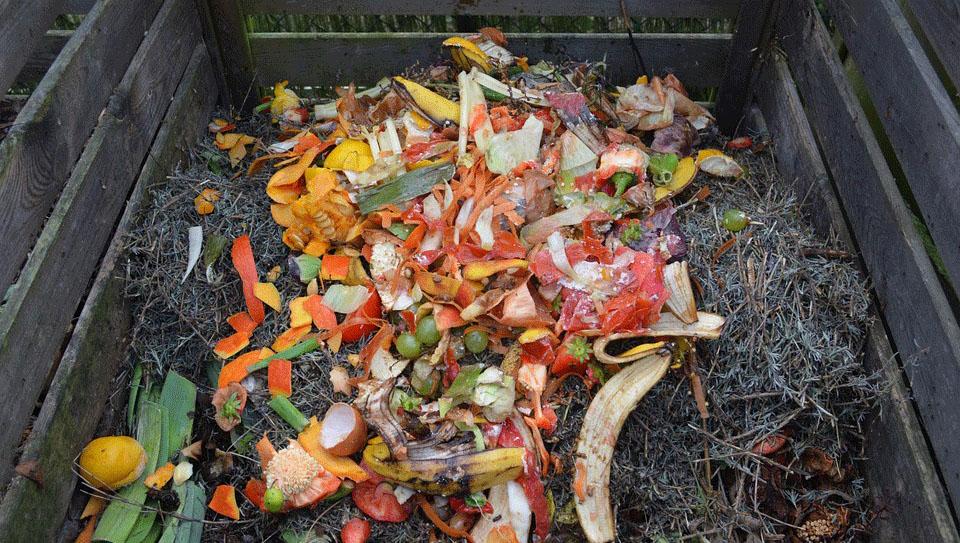 Πόσα φυτικά υλικά πετάμε στα σκουπίδια κάθε μέρα