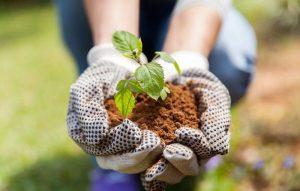 Τα Οφέλη Της Καλλιέργειας Στην Υγεία Του Ανθρώπου