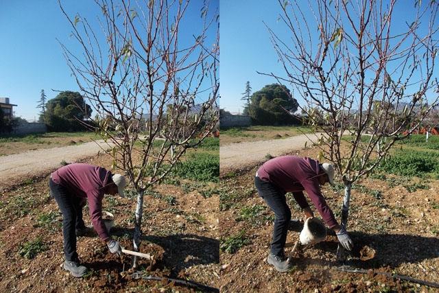 Ιανουάριος Εργασίες στον Κήπο