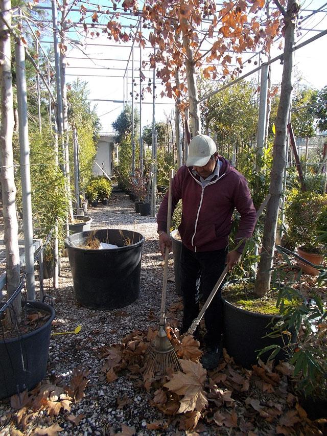 μαζεύουμε τα ξερά φύλλα