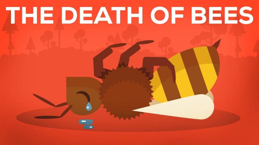 Το Ανησυχητικό Φαινόμενο της Μείωσης των Μελισσών