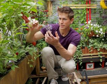 Προβλήματα Ασθένειες Φυτών