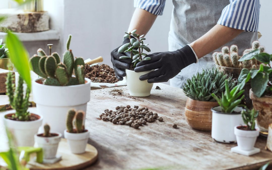 Ιδέες για να αξιοποιήσει το Internet ένα φυτώριο, γεωπονικό κατάστημα, κέντρο κήπου