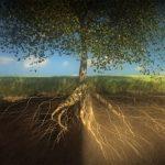 Υγιή φυτά. Το χώμα είναι ένας ζωντανός οργανισμός. Ρίζες φυτών, ριζοβακτήρια, μύκητας μικόρριζα, Χούμο