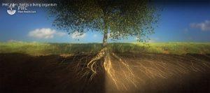 Διαφορά υγιούς με μη υγιές χώμα