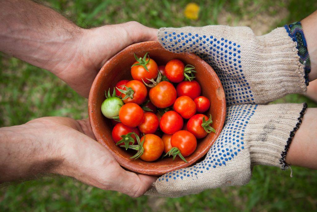 Συνεργασία για τον κήπο
