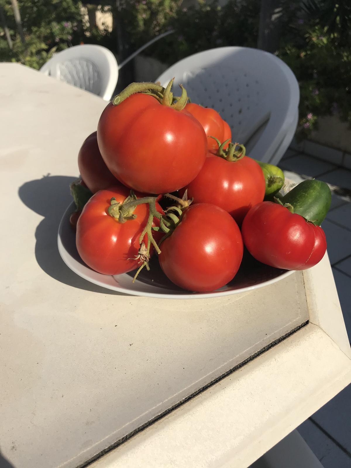 ντομάτες με λίπανση από κομπόστ 02ντομάτες με λίπανση από κομπόστ 02